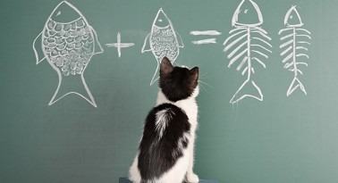 Come educare un gattino in casa
